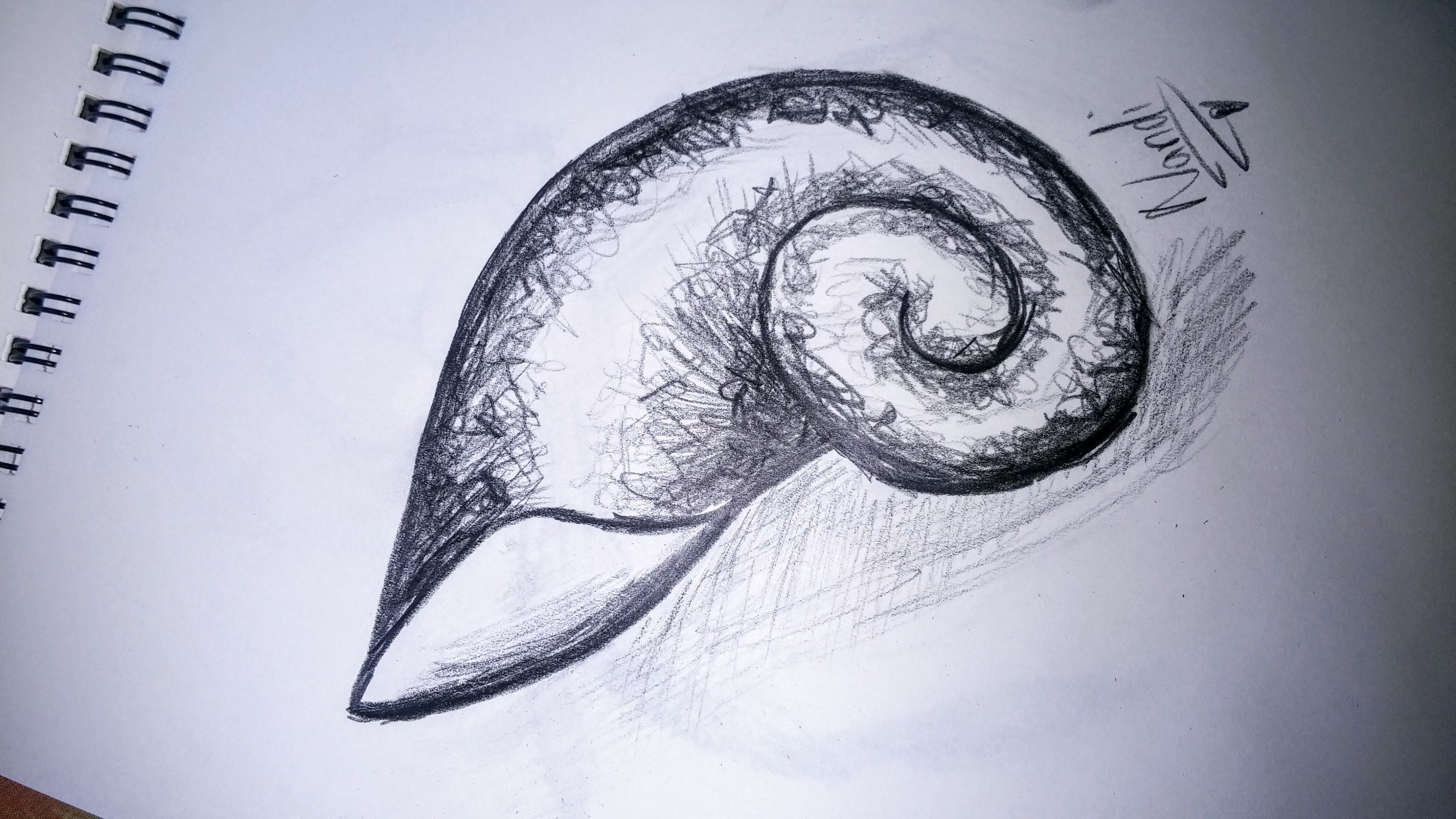 4096x2304 How To Draw A Spiral Shell