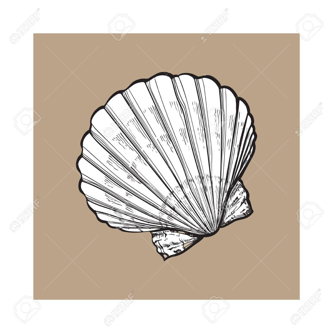 1300x1300 White Scallop Sea Shell, Sketch Style Vector Illustration Isolated