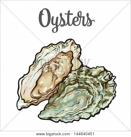 450x470 Fresh Oyster, Sketch Style Vector Vector Amp Photo Bigstock