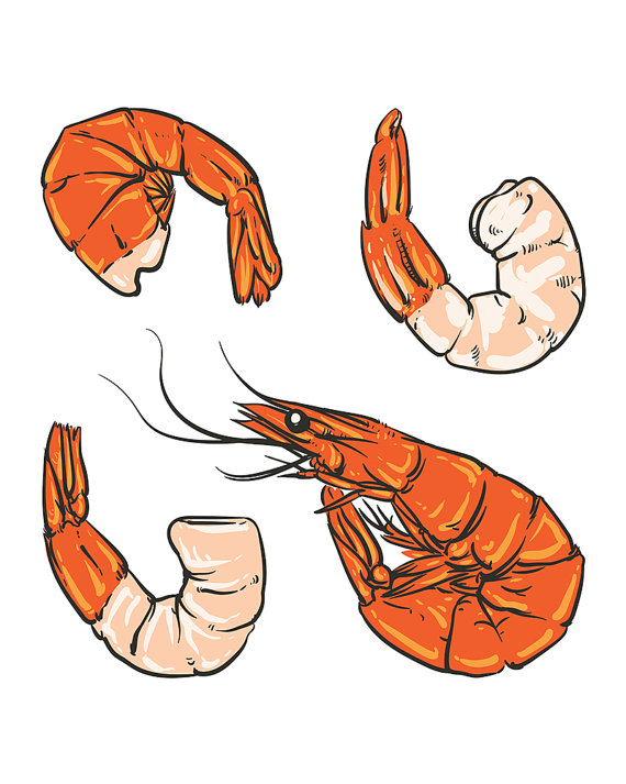 570x713 Seafood Cocktail Drawing. Shrimp For A Party Or Dinner. Hand Drawn
