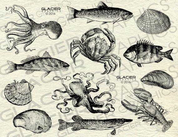 570x440 Vintage Seafood Illustrations Clipart Printable Sea Creature