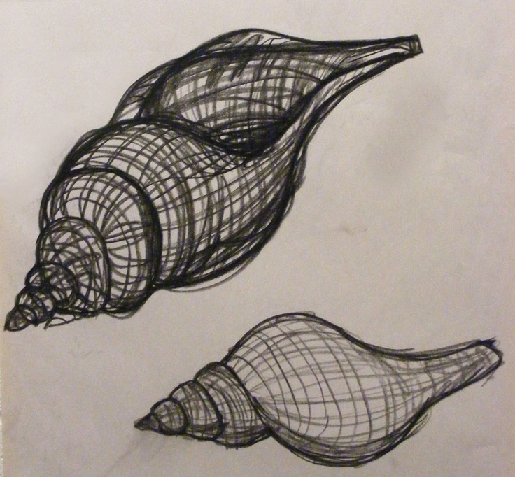 Line Drawing Natural Forms : Shells drawing at getdrawings free for personal use