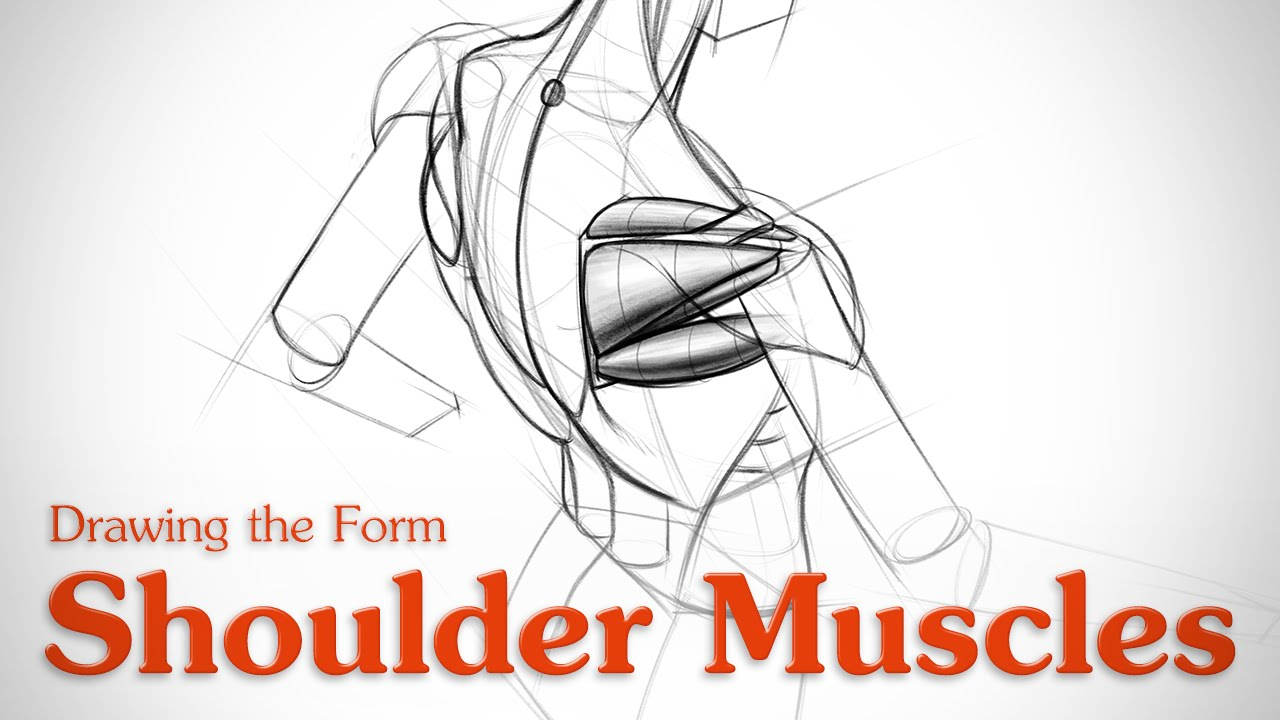 1280x720 How To Draw Shoulder Muscles