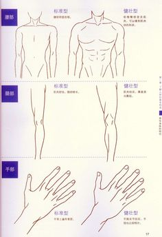 236x344 Neck And Shoulders Artist Reference Anatomy Drawing Tutorial