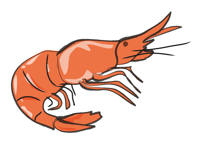 640x480 Shrimp Clipart Line Drawings Prawn Shrimp, Clip