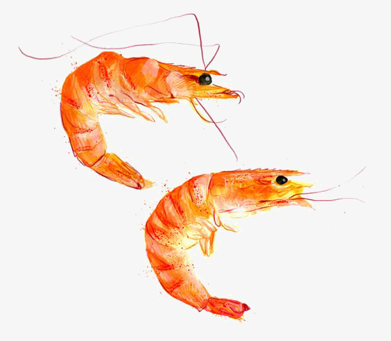 564x491 Drawing Prawn, Steamed Prawn, Red Prawn, Shrimp Png Image