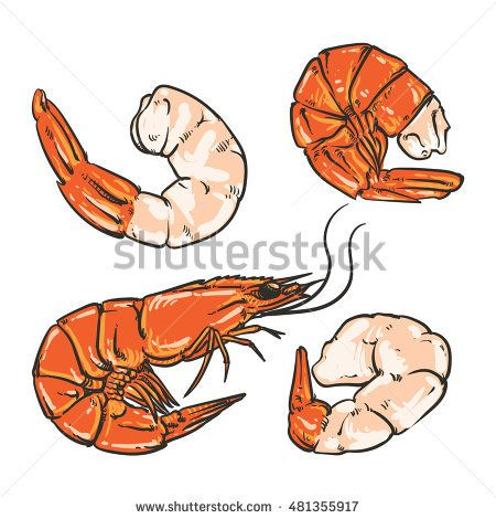 450x470 Shrimp Cocktail Drawing On A White Background. Seafood For A Party