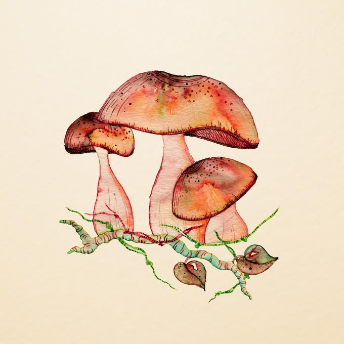 680x680 Wild Shrooms. Nature. Drawings. Pictures. Drawings Ideas For Kids