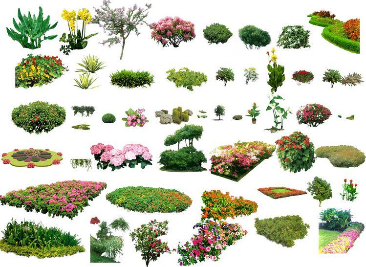 749x546 Landscape Plants Amp Shrubs Collection Architectural Resources