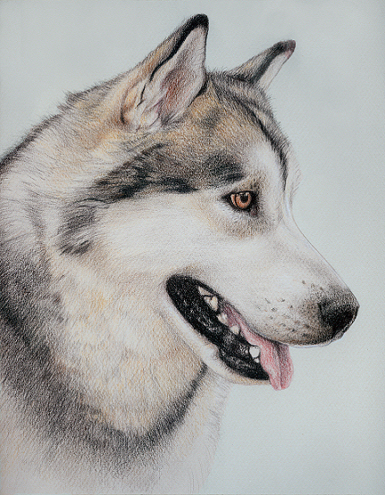 Siberian Husky Drawing at GetDrawings.com | Free for personal use ...
