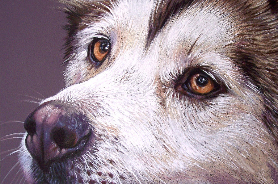 siberian husky drawing at getdrawings com free for personal use