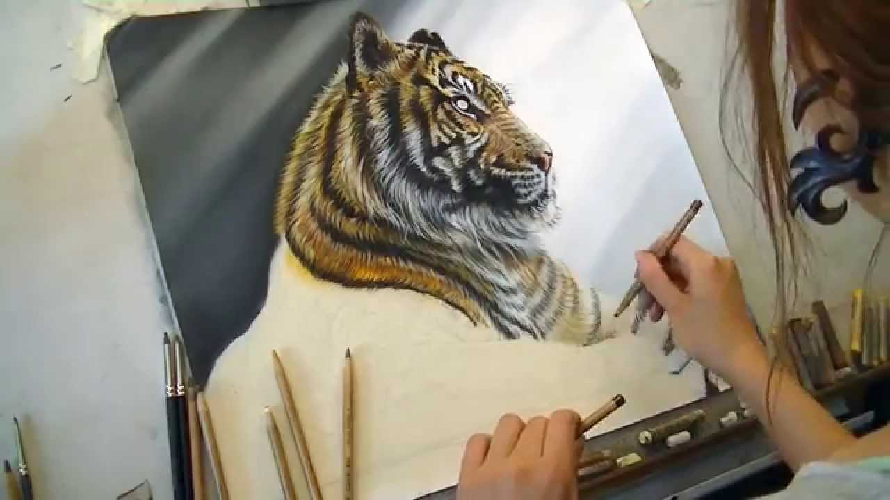 1280x720 Draw My Pets Siberian Tiger