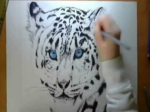 480x360 Speed Drawing Siberian Tiger