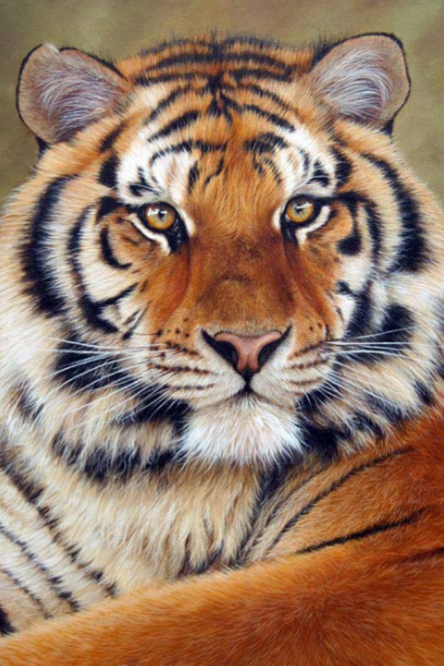 640x960 Tiger Drawing, Much Like Other One Where I Commented On