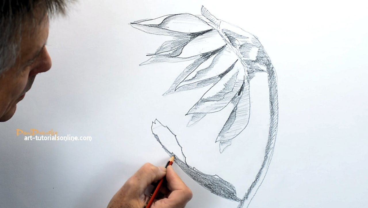 1280x724 How To Draw A Sunflower Sideview