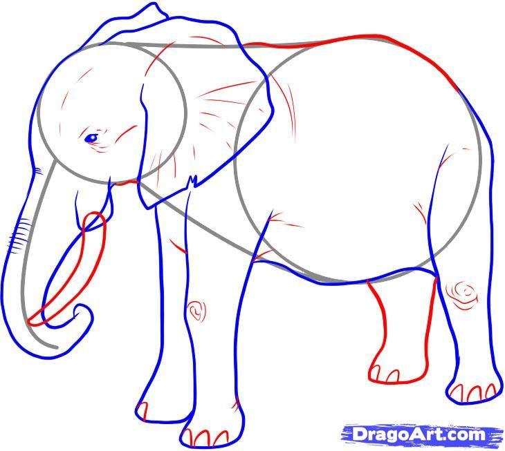 730x653 18 Best Elephants Images On Sketches, Essen