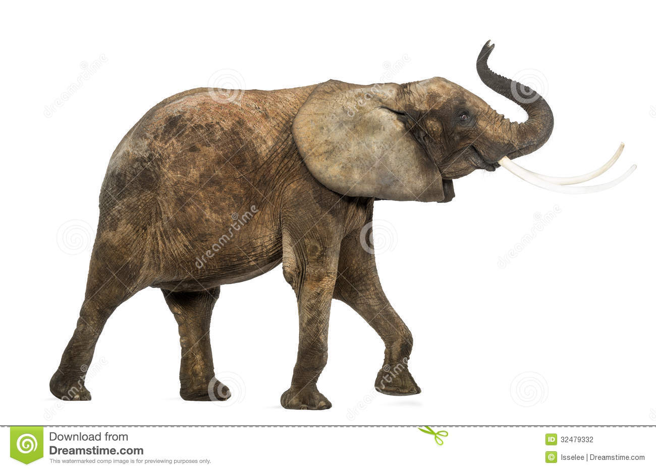 1300x933 Elephant Side View Drawing Elephant Head Side View Stock Photos