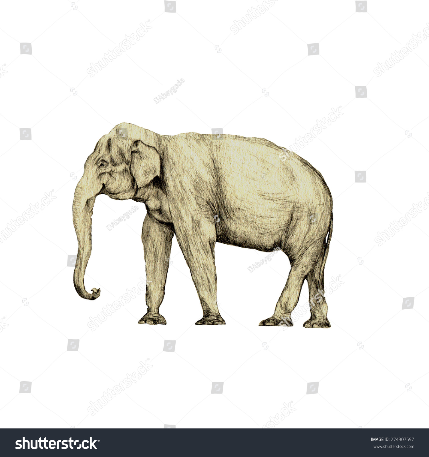 1500x1600 Elephant Side View Drawing High Quality Side View Illustration