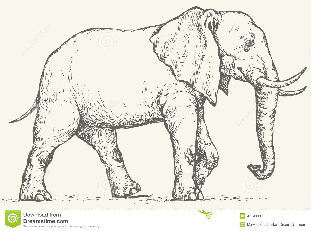 1300x967 Elephant Side View Drawing Vector Drawing. Elephant Stock Vector