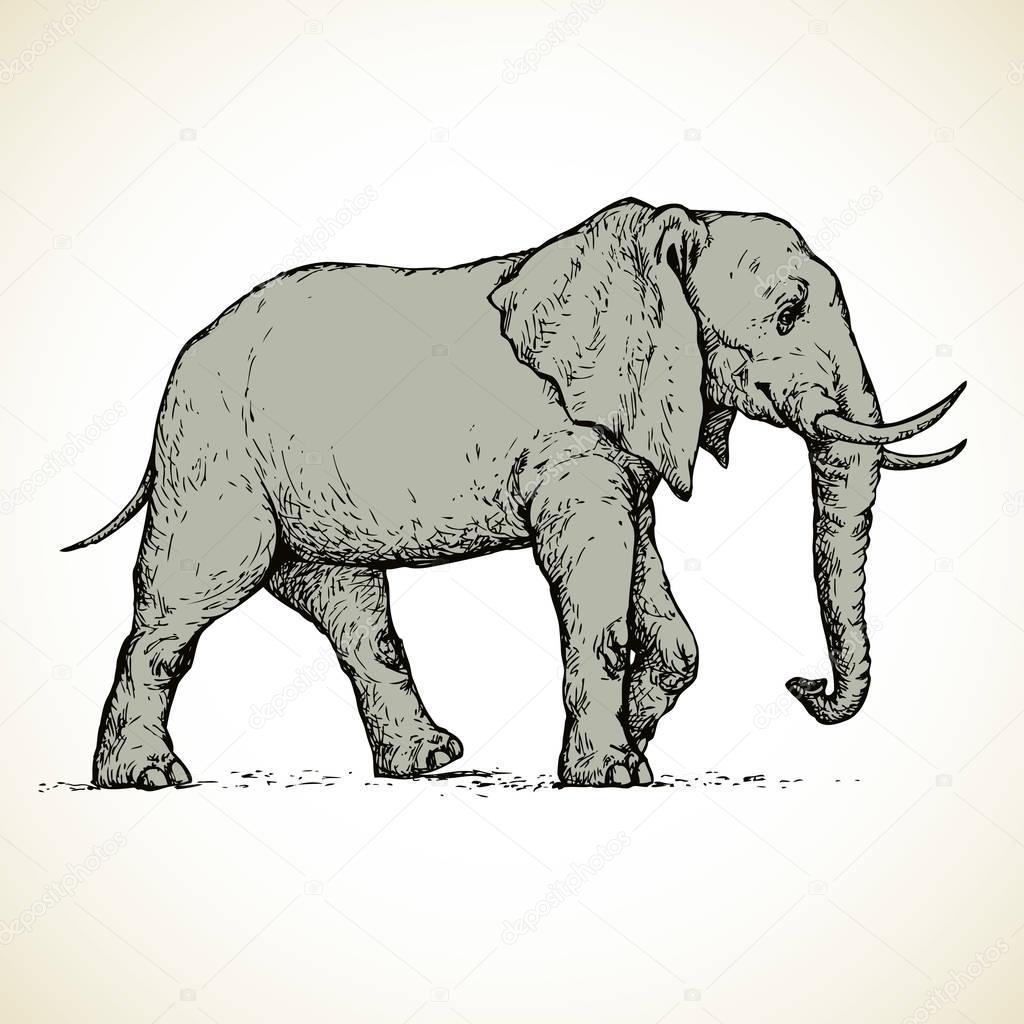 1024x1024 Elephant. Vector Drawing Stock Vector Marinka