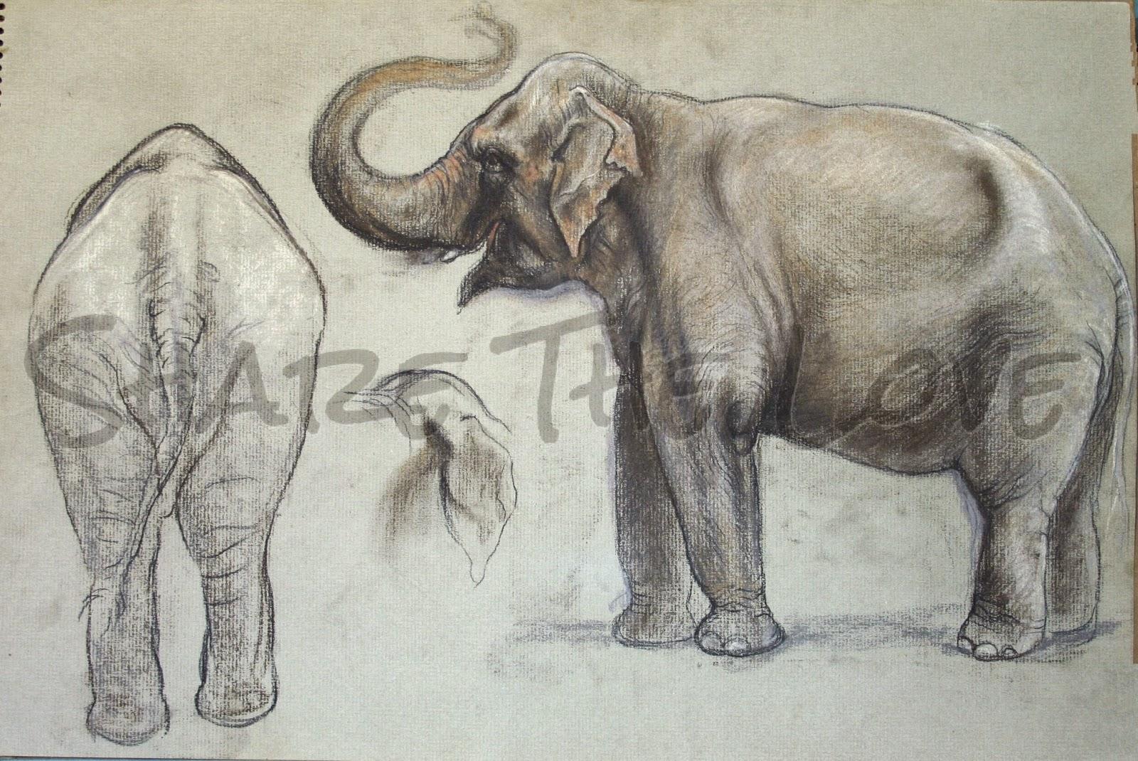 1600x1070 Share The Love Maureen's Elephant Drawings