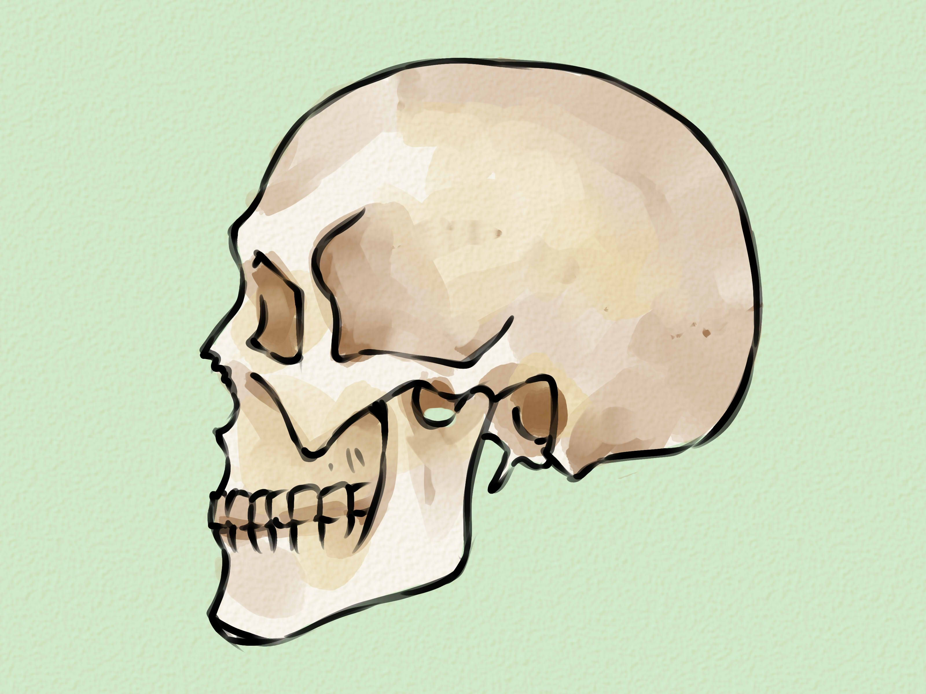 3200x2400 Draw A Skull Painting Inspiration, Sketches And Drawings
