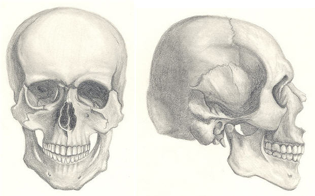 621x386 How To Draw A Skull 50 Tutorials Drawn In Black
