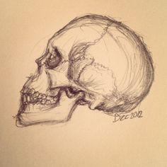 236x236 Skull Side Profile Drawing Can You Draw Like This Learn