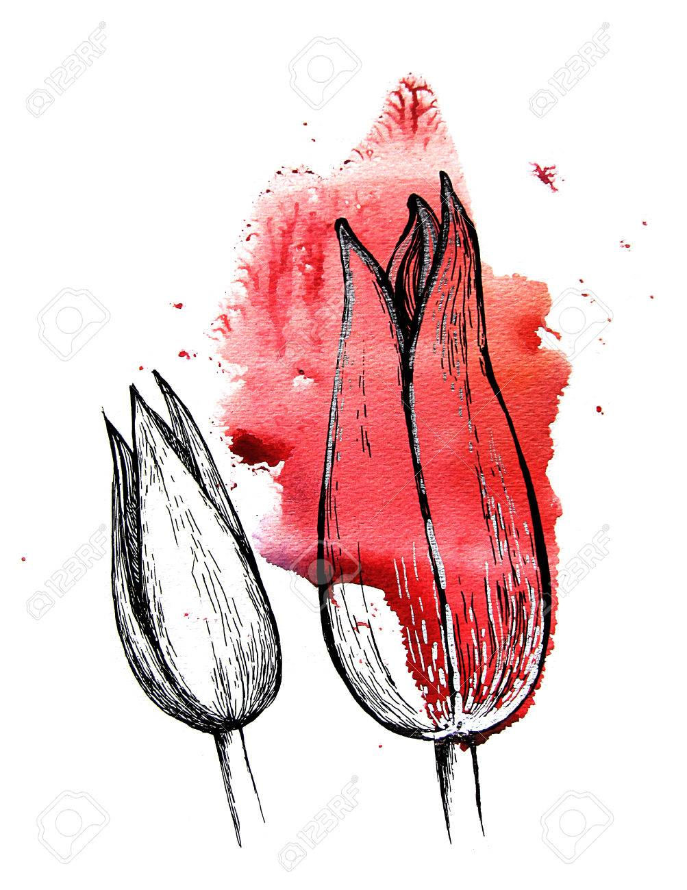 1003x1300 Red Tulip Buds, Handmade Black And Silver Drawing On A Watercolor