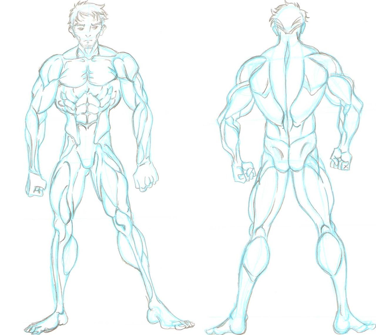 Male Anatomy Drawing Reference