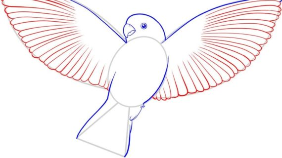 570x320 Simple Bird Drawing How To Draw A Flying Bird How To Draw A Bird
