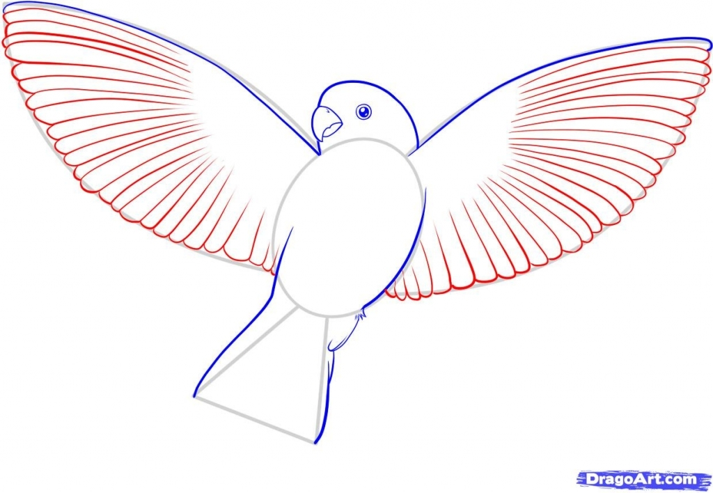 1024x708 Simple Bird Drawing How To Draw A Flying Bird How To Draw A Bird