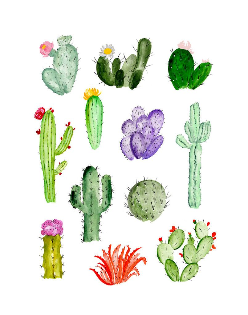 Simple Cactus Drawing At Getdrawings Free Download