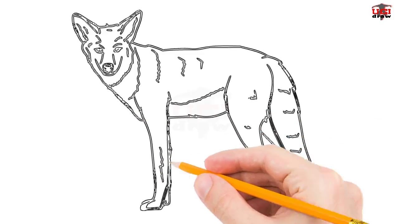 1280x720 How To Draw A Coyote Step By Step Easy For Beginnerskids Simple
