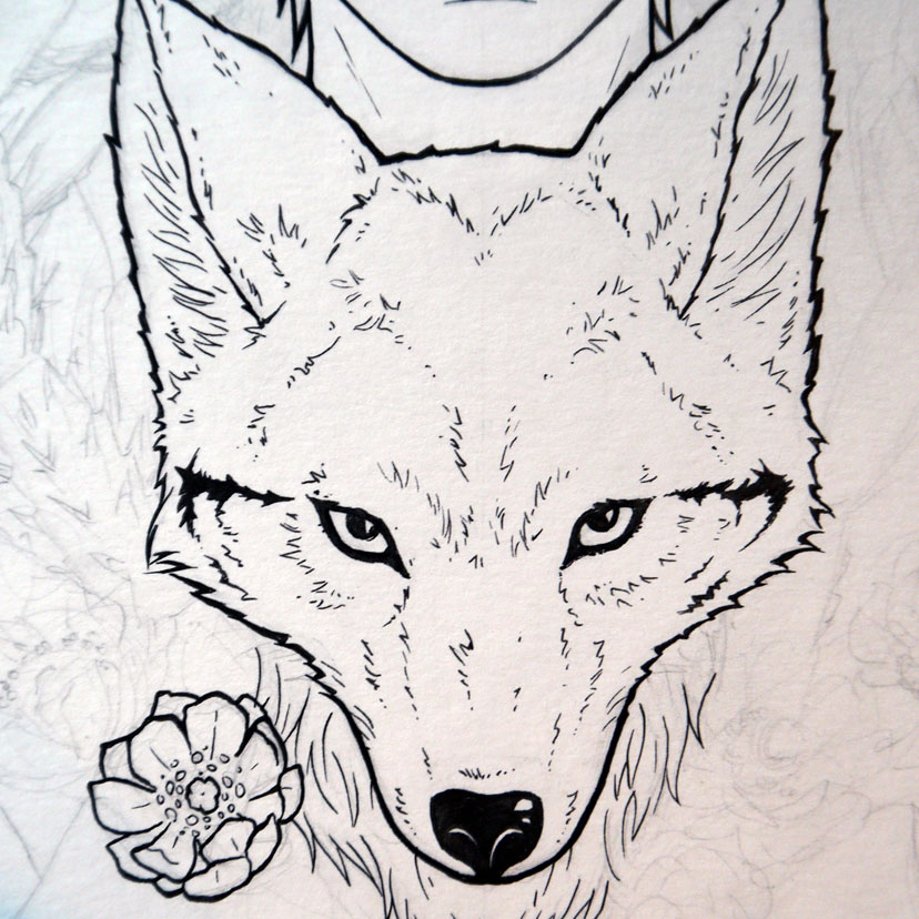 828x828 Coyote Drawing, I Want A Tattoo That Incorporates This Tattoo