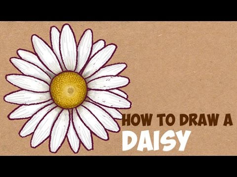 480x360 How To Draw A Daisy Flower Easy Step By Step Drawing Tutorial