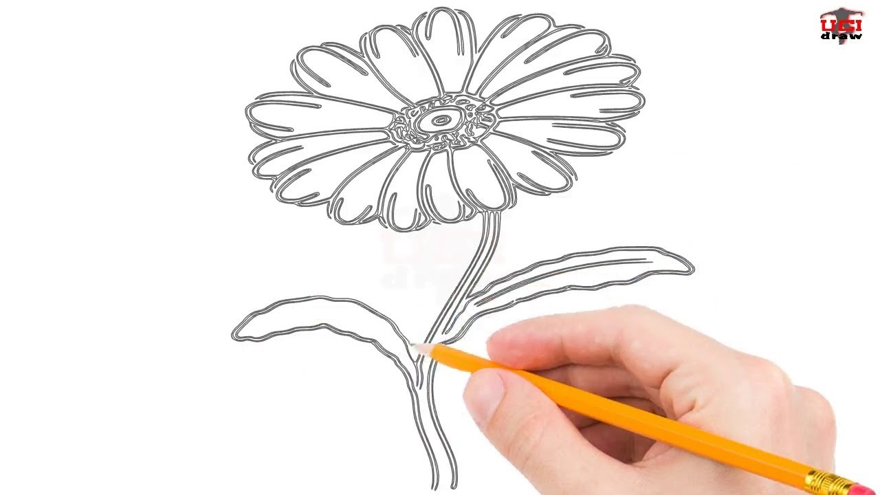 1280x720 How To Draw A Daisy Step By Step Easy For Kidseginners Simple
