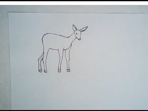 Line Drawing Step By Step : Simple deer drawing at getdrawings free for personal use