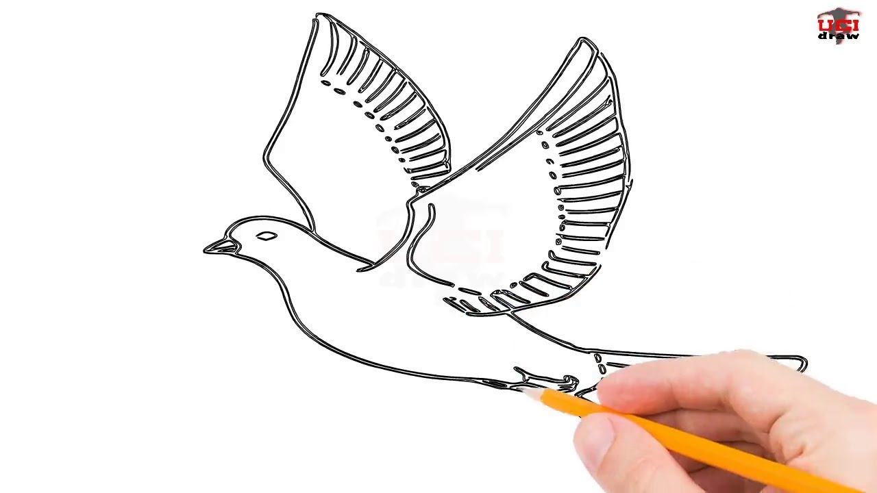 Simple Dove Drawing At Getdrawings Com Free For Personal Use