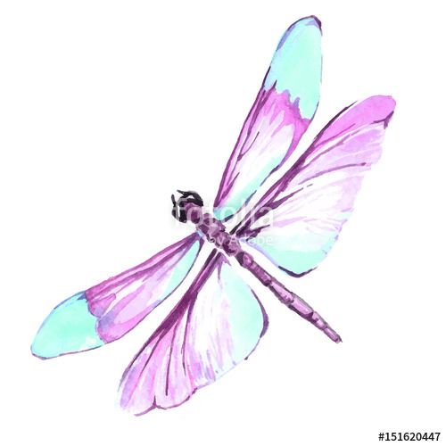 500x500 watercolor color dragonfly drawing stock image and royalty free