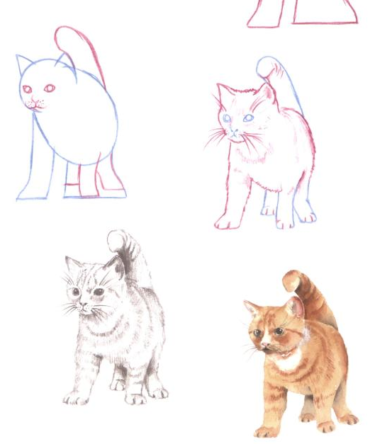 529x627 10 Tutorials On How To Draw A Cat Drawn In Black