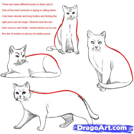 519x520 Image Result For Simple Drawings Of Cats In Typical Poses Cats