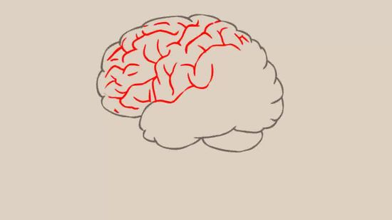 Simple Drawing Of Brain At Getdrawings Free For Personal Use