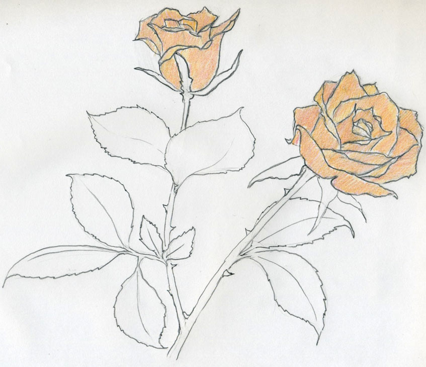 847x729 Easy Sketch Roses Drawings A Roses Easy Sketches