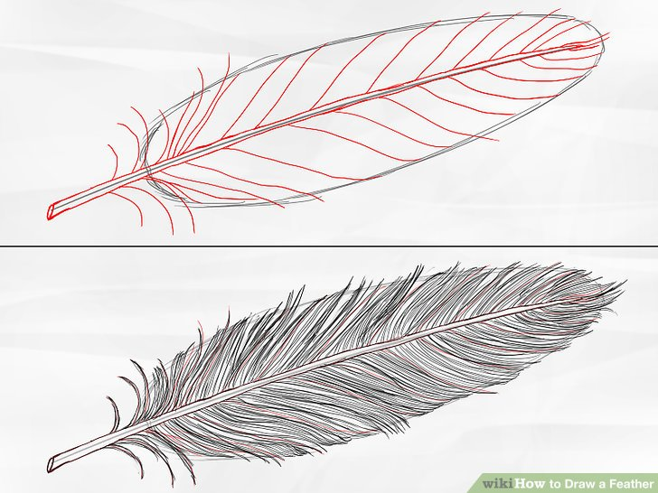 728x546 How To Draw A Feather 8 Steps With Pictures