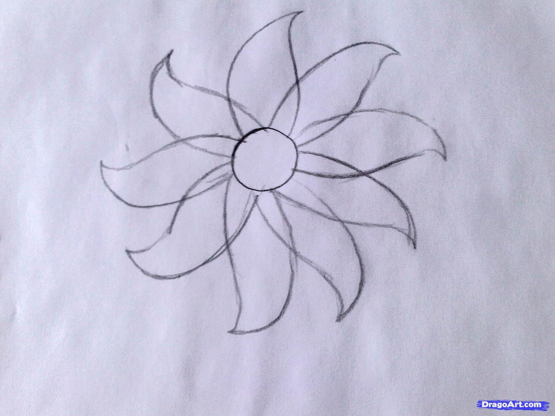 Daisy Flower Line Drawing : Simple flower drawing step by at getdrawings free for