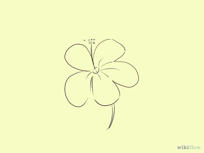670x503 Draw A Cartoon Hibiscus Flower Hibiscus Flowers, Hibiscus