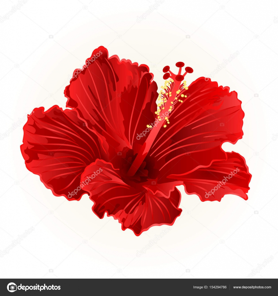 963x1024 Red Hibiscus Simple Tropical Flower Vintage Hand Draw Vector