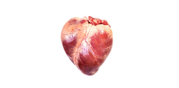 Simple human heart drawing at getdrawings free for personal 590x290 label the human heart ccuart Image collections