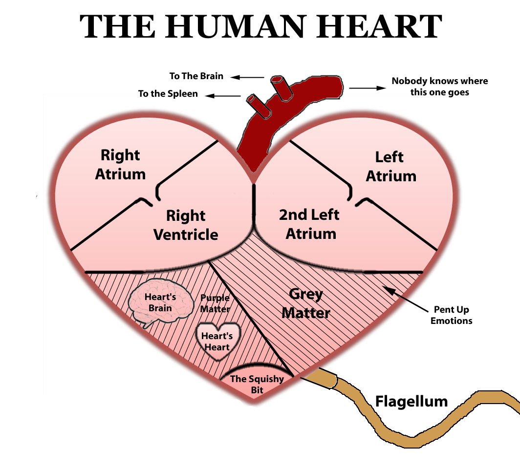 Simple Human Heart Drawing at GetDrawings | Free download